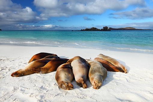 ガラパゴス諸島「Galapagos marine iguana」:スマホ壁紙(15)