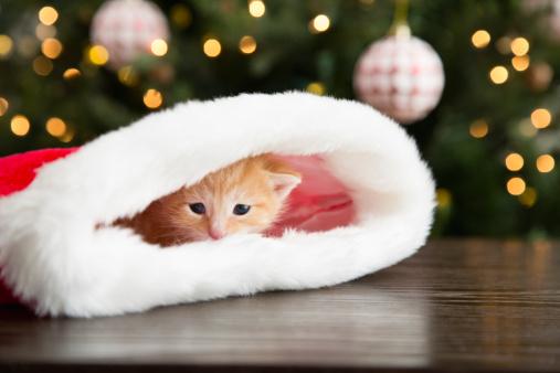 Kitten「Kitten hiding in Christmas stocking」:スマホ壁紙(9)