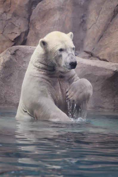 Wilderness Area「Animals At In The Brookfield Zoo Try To Beat The Summer Heat」:写真・画像(16)[壁紙.com]