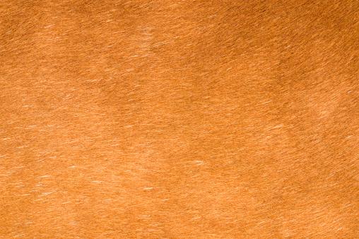 Horse「Horse Hair Background」:スマホ壁紙(16)