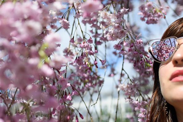 Flower「Annual Cherry Blossom Festival Held At Brooklyn Botanic Gardens」:写真・画像(16)[壁紙.com]