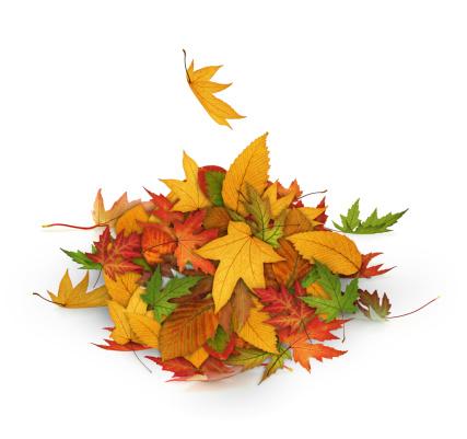 かえでの葉「堆積の秋の葉」:スマホ壁紙(11)