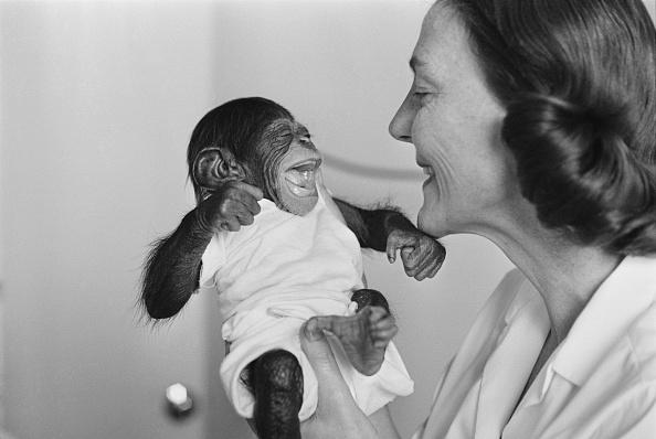 Affectionate「Baby Chimp」:写真・画像(4)[壁紙.com]