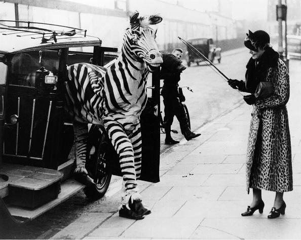 Animal「Zebra Cab」:写真・画像(19)[壁紙.com]