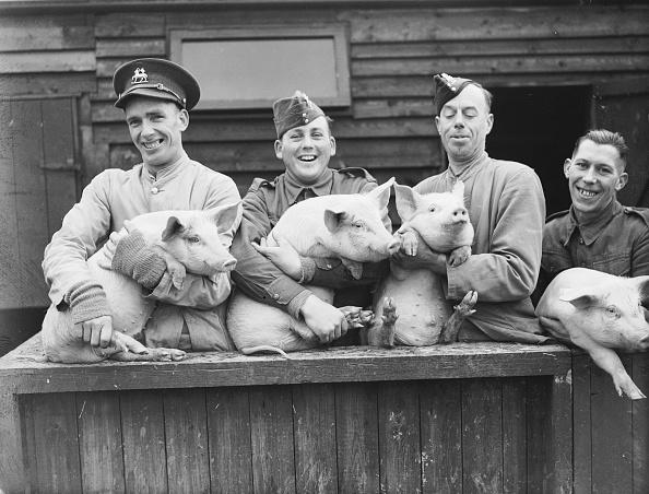 Humor「Pig Keepers」:写真・画像(17)[壁紙.com]