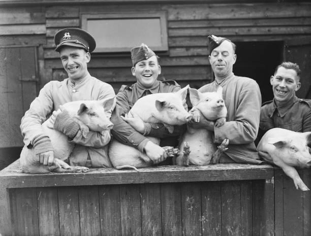 Pig Keepers:ニュース(壁紙.com)