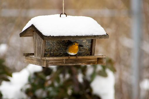 Bird Seed「Birds feeder」:スマホ壁紙(5)