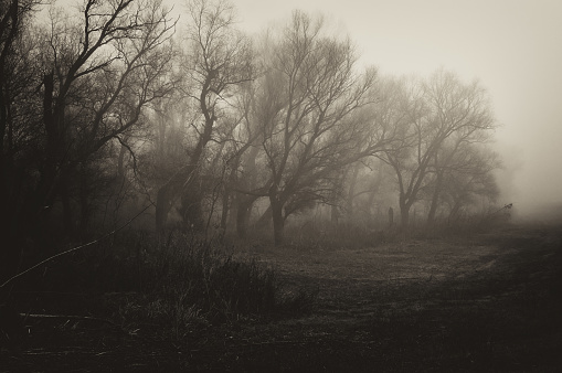 Sepia Toned「Dark spooky winter landscape」:スマホ壁紙(12)