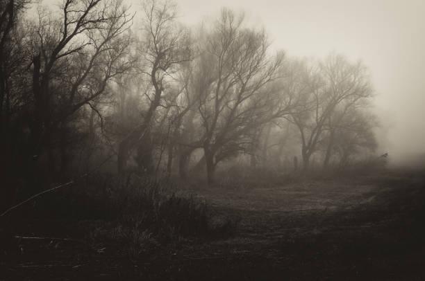 Dark spooky winter landscape:スマホ壁紙(壁紙.com)