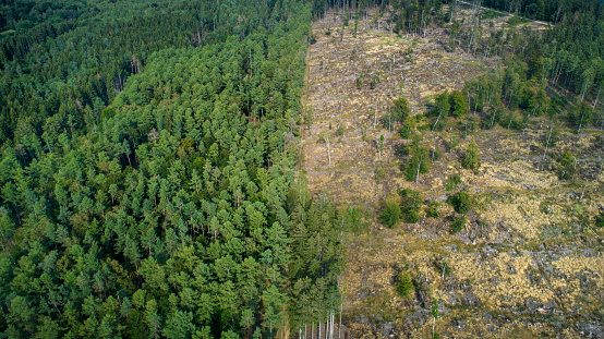 Lumber Industry「Deforested area, Taunus mountains, Germany」:スマホ壁紙(5)