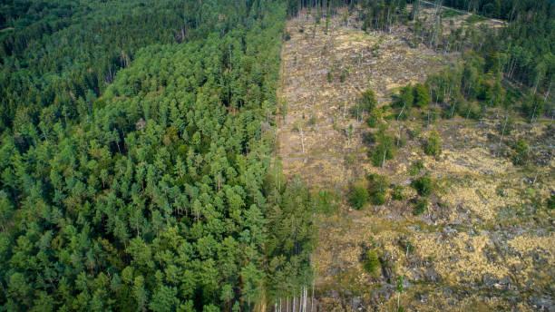 Deforested area, Taunus mountains, Germany:スマホ壁紙(壁紙.com)