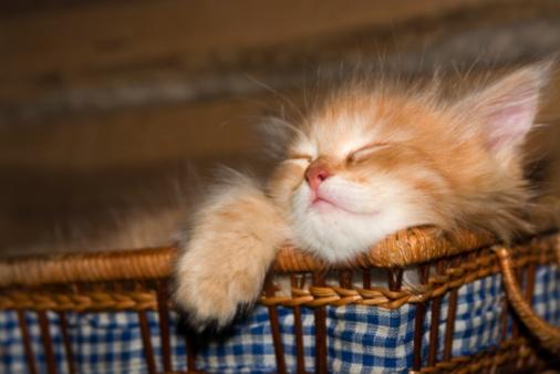 Kitten「ゲームを」:スマホ壁紙(9)