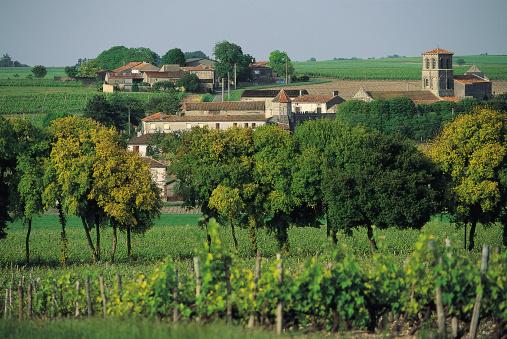 Nouvelle-Aquitaine「French vineyard」:スマホ壁紙(10)