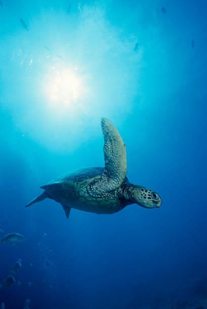Turtle Flight:スマホ壁紙(壁紙.com)