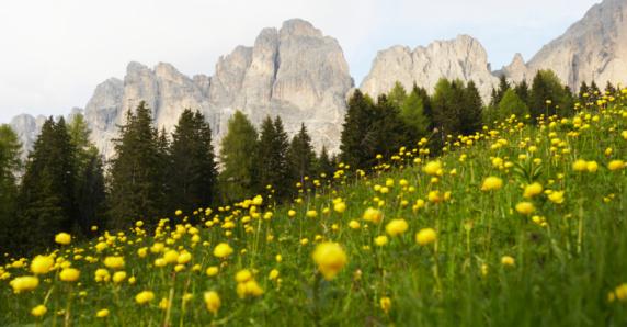 Surrounding「Italy, Alto Adige, Dolomites, Catinaccio mountain range and meadow」:スマホ壁紙(8)