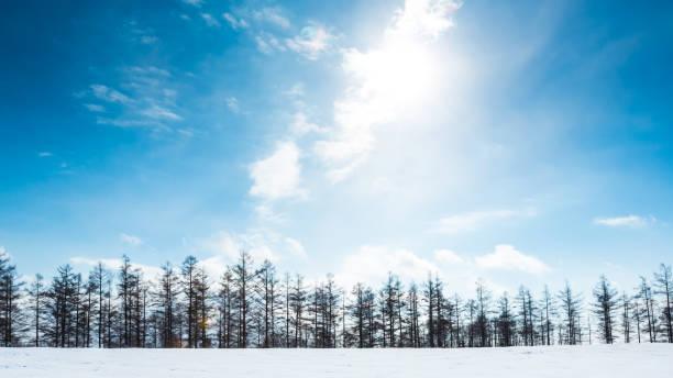 Snowy Hills and Birch Trees in Biei, Hokkaido:スマホ壁紙(壁紙.com)