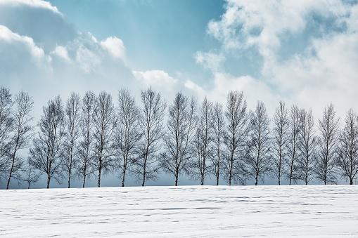 Larch Tree「Snowy Hills and Birch Trees in Biei, Hokkaido」:スマホ壁紙(19)