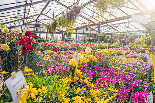 Plant Nursery「Various colorful flowers growing in garden center」:スマホ壁紙(15)