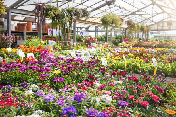 Various colorful flowers growing in plant nursery:スマホ壁紙(壁紙.com)