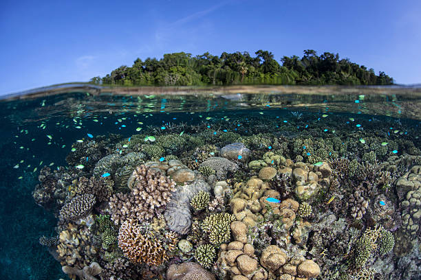 A diverse coral reef grows in shallow water in the Solomon Islands.:スマホ壁紙(壁紙.com)