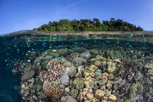 ソロモン諸島「A diverse coral reef grows in shallow water in the Solomon Islands.」:スマホ壁紙(9)