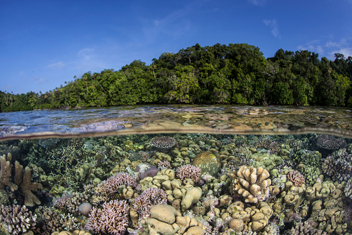 ソロモン諸島「A diverse coral reef grows in shallow water in the Solomon Islands.」:スマホ壁紙(10)