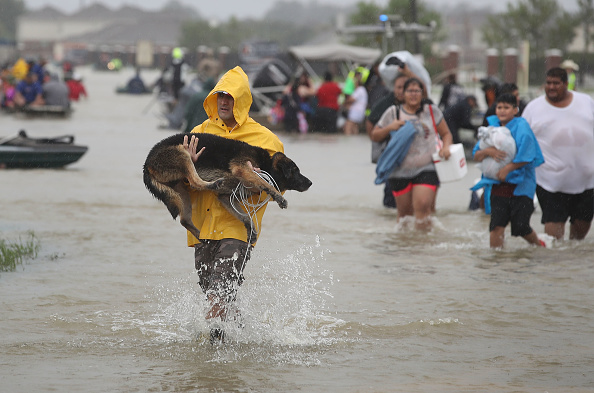 動物「Epic Flooding Inundates Houston After Hurricane Harvey」:写真・画像(5)[壁紙.com]