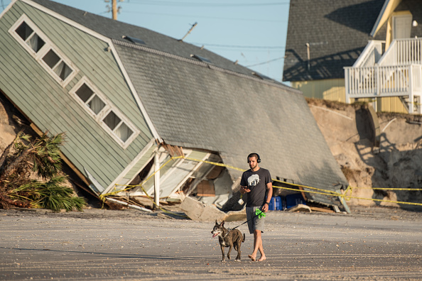 犬「Florida Begins Long Recovery After Hurricane Irma Plows Through State」:写真・画像(5)[壁紙.com]