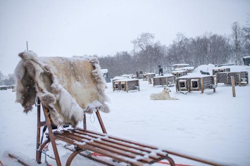Sled「Sleigh in winter scenery,Kirkenes,Norway」:スマホ壁紙(8)