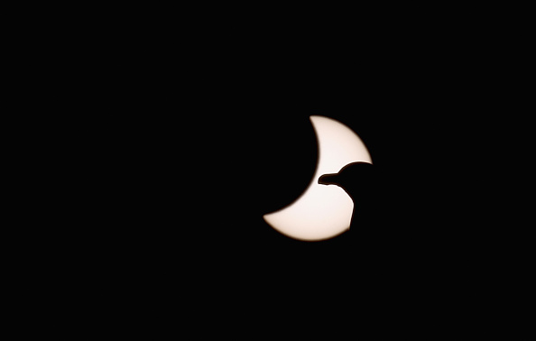 動物「Rare Partial Solar Eclipse Is Viewed Around The UK」:写真・画像(1)[壁紙.com]