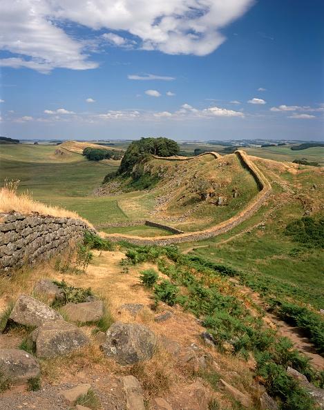 Bracken「Hadrians Wall」:写真・画像(18)[壁紙.com]