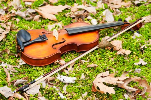 Violin「Violin on grass.」:スマホ壁紙(16)