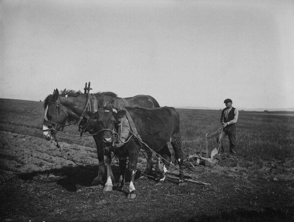 The Montifraulo Collection「Horse And Cow In Harness」:写真・画像(3)[壁紙.com]