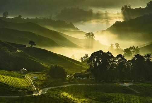Rolling Landscape「Malaysia, Cameron Highland, Elevated view of tea plantations with mist and morning sunlight」:スマホ壁紙(16)