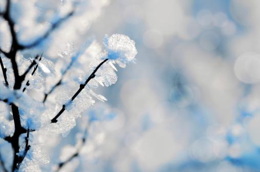 Frost「winter」:スマホ壁紙(19)