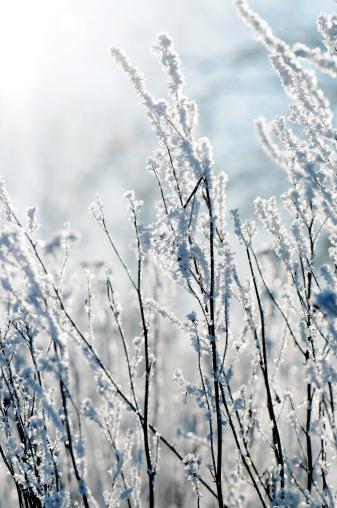 Snowdrift「winter」:スマホ壁紙(3)