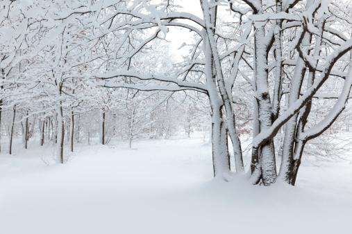 雪景色「冬小麦」:スマホ壁紙(10)