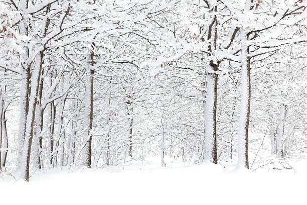 Winter:スマホ壁紙(壁紙.com)