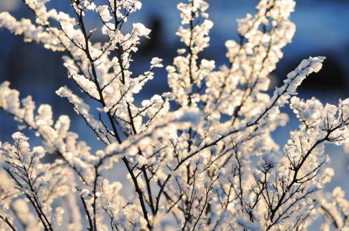Snowdrift「winter」:スマホ壁紙(10)