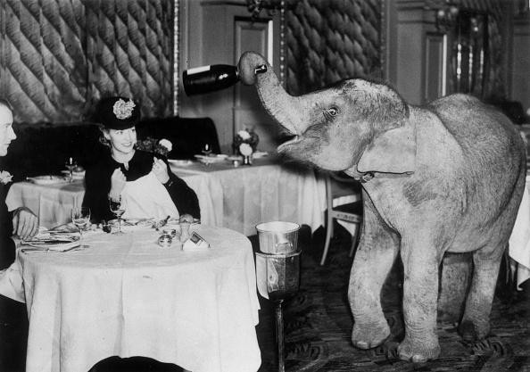 動物「Dumb Waiter」:写真・画像(17)[壁紙.com]