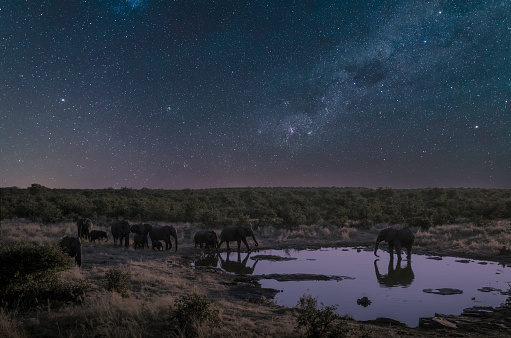 Animals In The Wild「Elephant herd drinking at a pool under starry sky」:スマホ壁紙(13)
