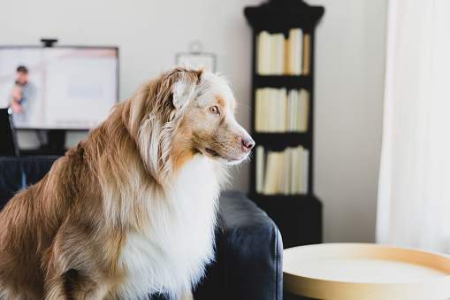 Real Life「Photo of pet dog looking out window」:スマホ壁紙(2)