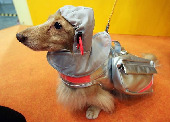 模型「New Rescue Jacket Protect Dogs From Natural Disaster」:写真・画像(8)[壁紙.com]