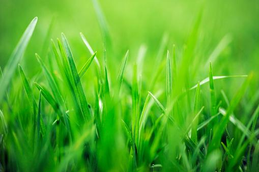 Blade of Grass「Lush Green Blades of Grass」:スマホ壁紙(19)