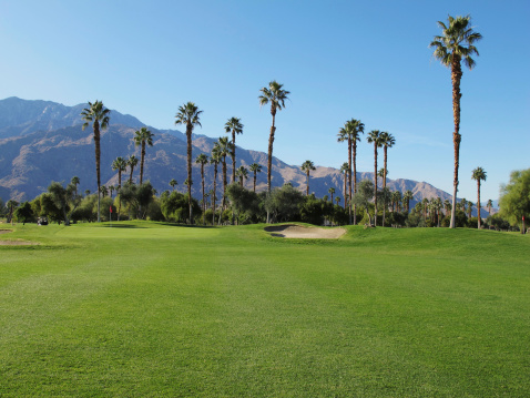 Sand Trap「Lush green golf course in the Palm Springs desert」:スマホ壁紙(14)