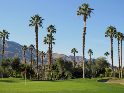 Sand Trap「Lush green golf course in the Palm Springs desert」:スマホ壁紙(0)