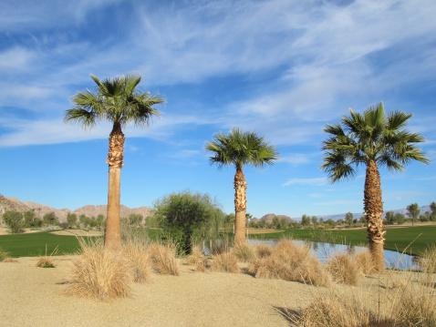 Water Hazard「Lush green golf course in the Palm Springs desert」:スマホ壁紙(6)