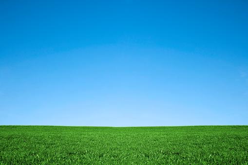 澄んだ空「青々とした緑の芝生とクールなブルーの空。自然の背景フィールド」:スマホ壁紙(14)