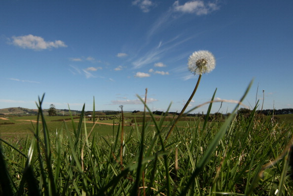 Farm「Dairy Farming In Waikato」:写真・画像(12)[壁紙.com]