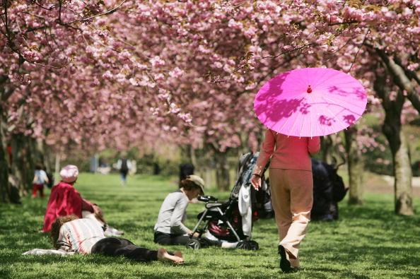 お祭り「Brooklyn Botanical Garden Holds Cherry Blossom Festival」:写真・画像(11)[壁紙.com]